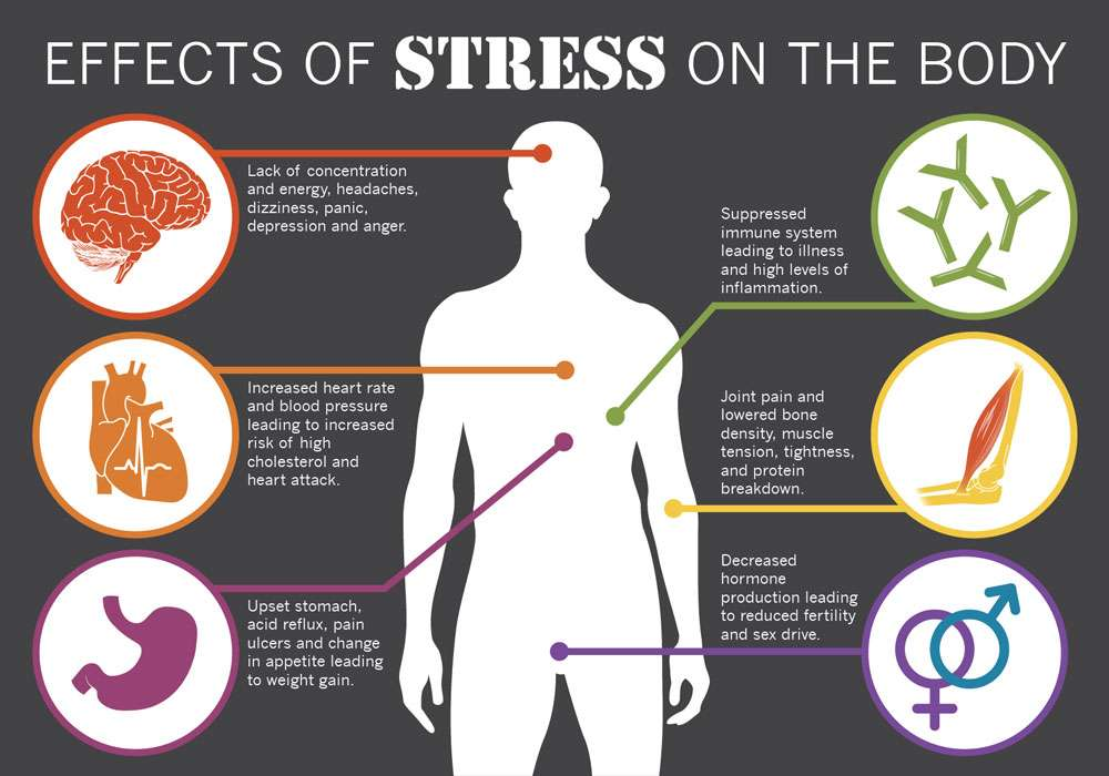 Stress on the Body Infographic